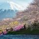 1 東京 富士山1天遊相片